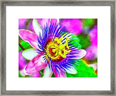Passiflora Edulis Otherwise Known As Passion Flower Framed Print by Digital Photographic Arts