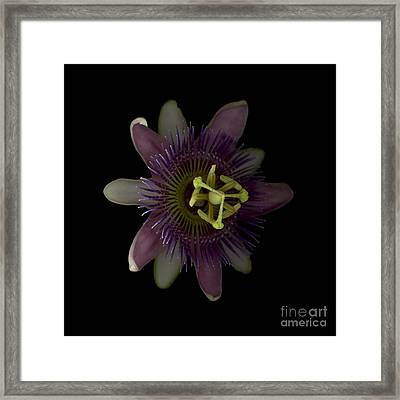 Passion Angle Front Framed Print by Heather Kirk