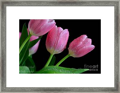 Passion For Pink Framed Print by Tracy  Hall