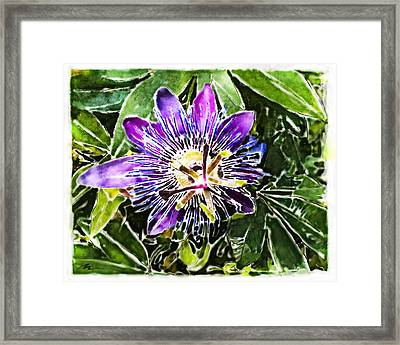 Passion Fruit Flower Framed Print by Nato  Gomes