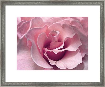 Passion Pink Rose Flower Framed Print by Jennie Marie Schell