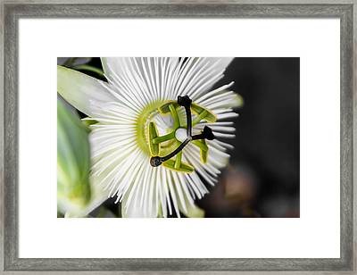 Passionflower Framed Print by Photographic Art by Russel Ray Photos