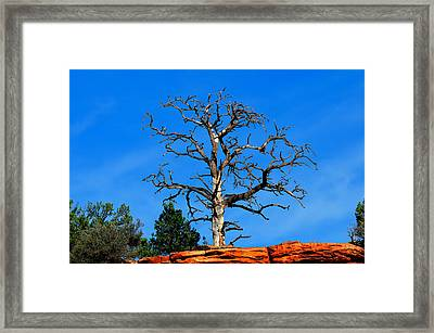 Past Prime Framed Print by Greg Norrell