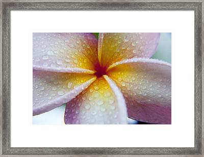 Pastel Droplets Framed Print by Sean Davey