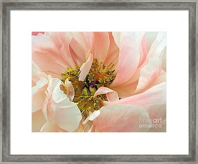 Pastel Floral Framed Print by Kaye Menner