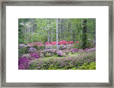 Pastel Forest Framed Print by Eggers   Photography