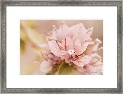 Pastel Paper Flower Bougainvillea Framed Print by Julie Palencia