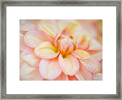 Pastel Petals And Drops Framed Print by Julie Palencia
