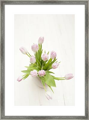 Pastel Pink Tulips Framed Print by Anne Gilbert