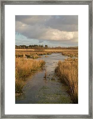 Pasture Of Plenty Framed Print by Odd Jeppesen