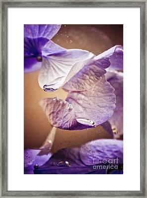 Patak Tubig Framed Print by Bobby Villapando