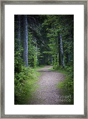 Path In Dark Forest Framed Print by Elena Elisseeva