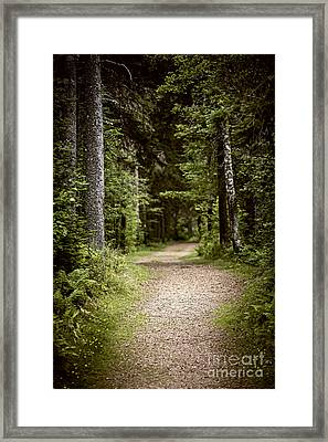 Path In Old Forest Framed Print by Elena Elisseeva