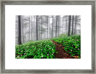 Path In The Mist Framed Print by Evgeni Dinev