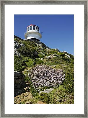 Path Leading To Lighthouse At Cape Point Framed Print by Sami Sarkis