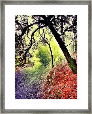 Path Framed Print by Marianna Mills