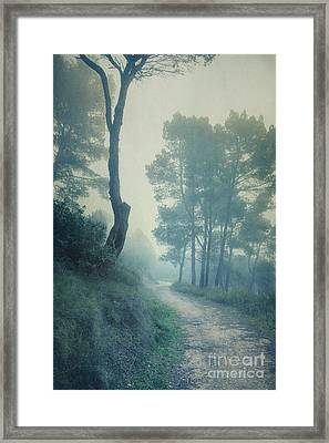 Path Through Pinewood Mist Framed Print by Paul Grand