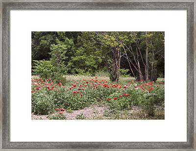 Path Through The Red Poppies Framed Print by Linda Phelps