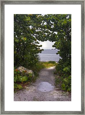 Path Through The Sea Grapes Framed Print by Marvin Spates