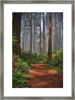 Path Thru The Redwoods Framed Print by Michael  Ayers