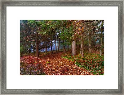 Path To A Fairytale Framed Print by A New Focus Photography