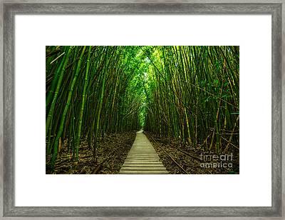 Path To Zen Framed Print by Jamie Pham