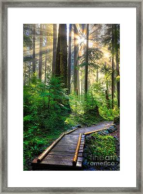 Pathway Into The Light Framed Print by Inge Johnsson