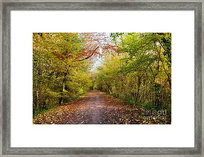Pathway Through Sunlit Autumn Woodland Trees Framed Print by Natalie Kinnear
