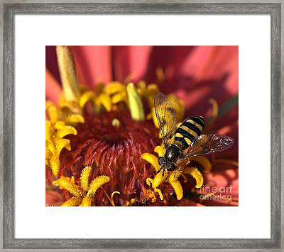 Patience Framed Print by Chris Fleming