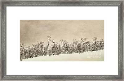 Patience Framed Print by Priska Wettstein