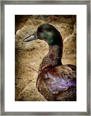 Patiently Waiting Framed Print by John Kain