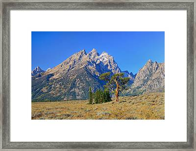 Patriarch Tree And The Cathedral Group Framed Print by Greg Norrell