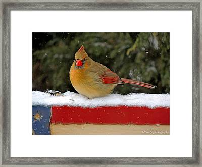 Patriotic Cardinal Framed Print by Mary Williamson