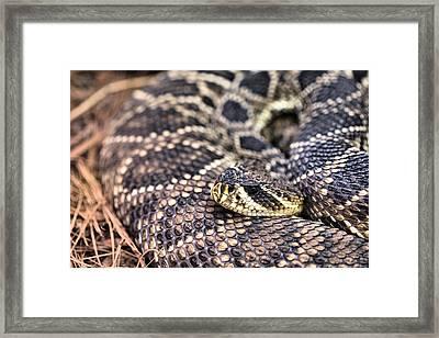 Patterns Framed Print by JC Findley