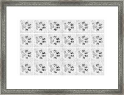 Paw Prints In The Snow Framed Print by Natalie Kinnear