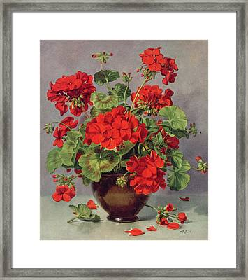 Geranium In An Earthenware Vase Framed Print by Albert Williams