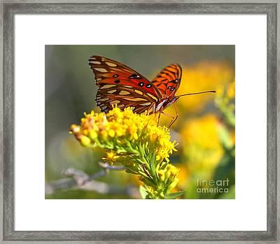 Pea Island Butterfly Framed Print by Adam Jewell