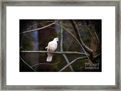 Peace Be With You Framed Print by Cris Hayes
