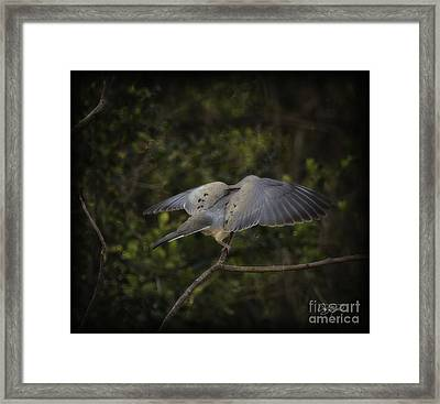 Peace Framed Print by Cris Hayes
