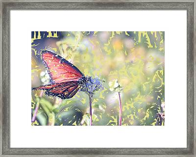 Peace Framed Print by Kelly Gibson