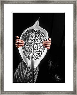 Peace Lily For The Mind Framed Print by Paulo Zerbato