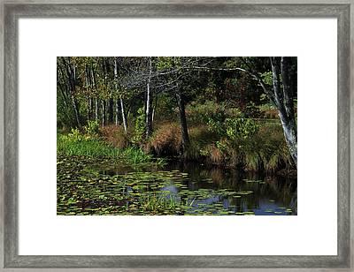 Peaceful Pond Framed Print by Karol Livote
