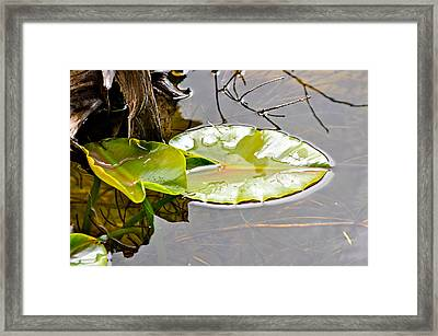 Peaceful Reflections 1 Framed Print by Roxy Hurtubise
