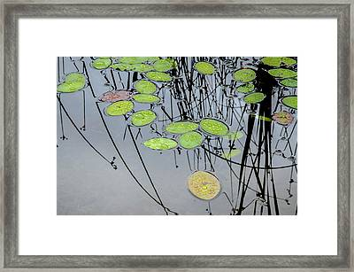 Peaceful Reflections 2 Framed Print by Roxy Hurtubise