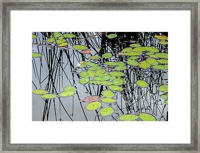 Peaceful Reflections 3 Framed Print by Roxy Hurtubise