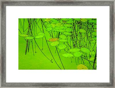 Peaceful Reflections 4 Framed Print by Roxy Hurtubise