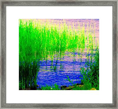 Peaceful Stream  Quebec Landscape Art Tall Grasses At The Lakeshore Waterscene Carole Spandau Framed Print by Carole Spandau