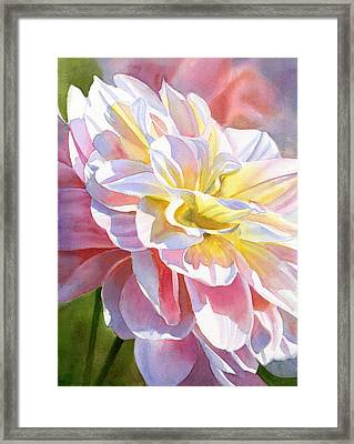 Peach And Yellow Dahlia Framed Print by Sharon Freeman
