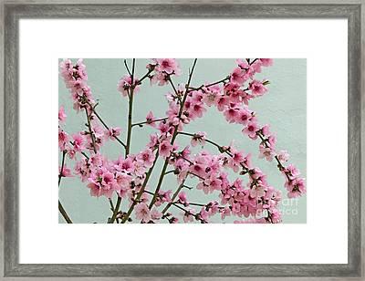 Peach Blossom 1 Framed Print by Rod Jones
