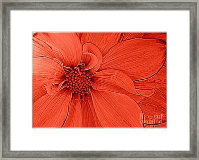 Peach Blossom Framed Print by Dora Sofia Caputo Photographic Art and Design